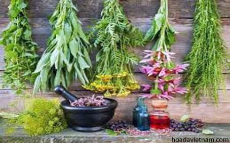 2 cách chữa viêm họng bằng thảo dược lâu đời của người phương Tây 4