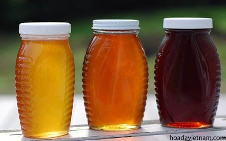 Top 10 loại mật ong diệt trừ viêm họng hiệu quả nhất 3