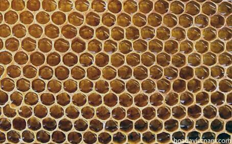 Thông tin thú vị về mật ong dùng để trị viêm họng 2