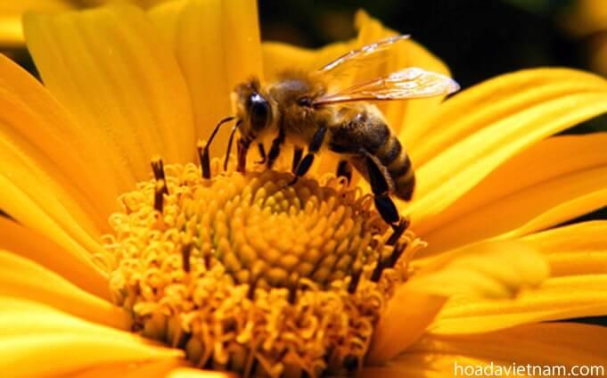 Thông tin thú vị về mật ong dùng để trị viêm họng 4