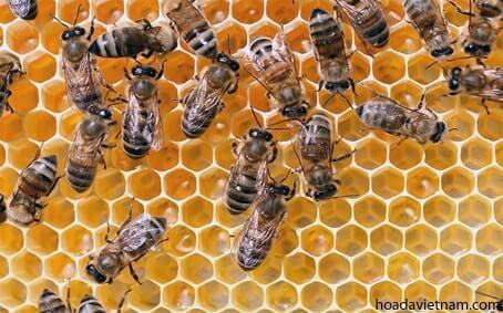 Thông tin thú vị về mật ong dùng để trị viêm họng 1