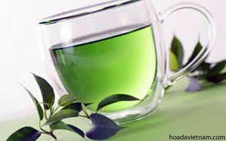 Các loại trà chữa viêm họng nên tìm hiểu 6